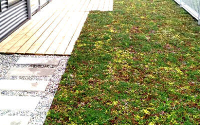 Project Update: Green Roof Installed at Passive Narrow House!